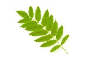 Animaux insectes et plantes altavistaventures Image collections